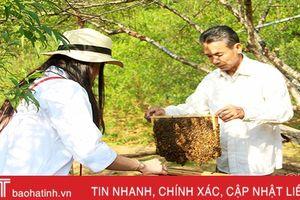 Nuôi ong vùng trà sơn Can Lộc - chờ cơ hội mới từ Farmstay
