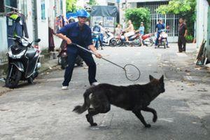Đội săn bắt chó thả rông ở Hà Nội sẽ hoạt động vào đầu năm 2019