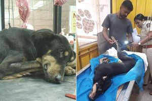 Bị 4 người đàn ông hiếp dâm tập thể, chú chó chết sau 3 ngày điều trị