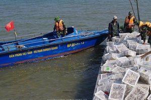 Bắt 2.000 con chim lậu từ Trung Quốc về Việt Nam