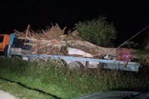Bắt giữ vụ vận chuyển trái phép một thân cây lớn