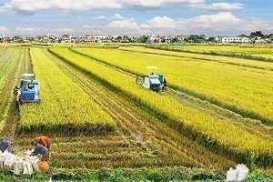 Ông Lê Huy Ngọ: Nông nghiệp Việt Nam đã vượt qua những 'cú sốc'