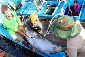 Siết chặt đánh bắt gần bờ để ngăn tận diệt thủy sản