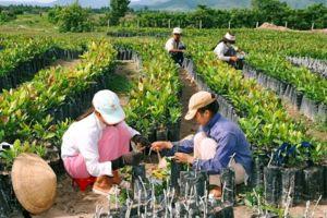 Kinh tế hợp tác, hợp tác xã có vai trò và đóng góp quan trọng trong phát triển kinh tế, xã hội
