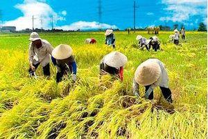 Dấu ấn xóa đói giảm nghèo