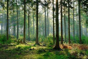 Nội dung của kế hoạch bảo vệ và phát triển rừng