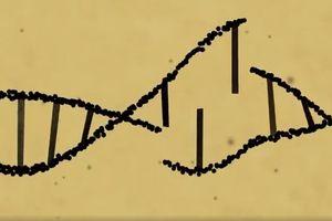 Thế giới quan ngại về chỉnh sửa gen em bé ở Trung Quốc