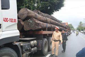 Quảng Nam: Bắt giữ 4 container chở 21 cây gỗ tròn