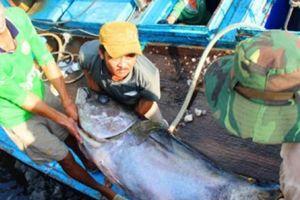 Ngư dân Bình Định quyết gỡ 'thẻ vàng' của EC
