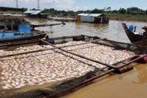 Hỗ trợ hơn 12 tỷ đồng cho người nuôi cá bè bị thiệt hại trên sông La Ngà