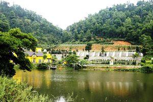 Chính phủ yêu cầu thanh tra toàn diện việc quản lý, sử dụng đất rừng ở huyện Sóc Sơn