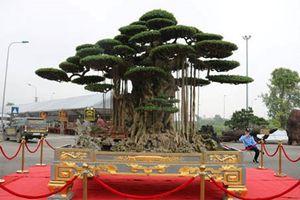 Chiêm ngưỡng tuyệt tác siêu cây 'Đại thế vân tùng' dát vàng 15 tỷ