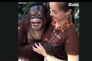 Sàm sỡ nữ nhân viên vườn thú, đười ươi 'cười hớn hở'