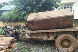 4 xe container chở hàng chục cây gỗ lớn trên Quốc lộ 1A đoạn qua Quảng Nam