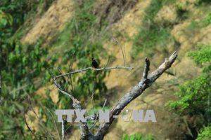Sử dụng hành lang bảo tồn đa dạng sinh học tại 3 tỉnh
