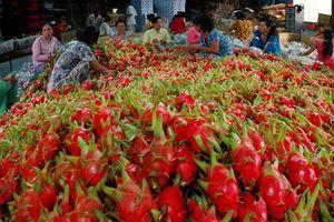 Nông sản Việt khoác 'áo ngoại'!