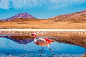 Ngắm chim hồng hạc, thiên hà Milky tại sa mạc Atacama