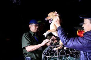 Theo chân đội bắt chó thả rông ở Hà Nội từ mờ sáng