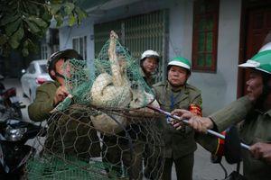 Đội bắt chó thả rông Hà Nội ra quân