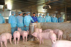 Dịch tả lợn Châu Phi chỉ còn cách Việt Nam 150km