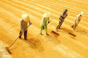 Xuất khẩu gạo Việt Nam 'thẳng tiến' tới mốc 6,15 triệu tấn