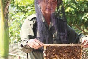 Làm giàu ở nông thôn: Nuôi ong kết hợp Farmstay, du khách thích mê