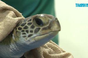 Cận cảnh nỗ lực cứu rùa xanh bị thương tích, bụng chứa đầy rác thải