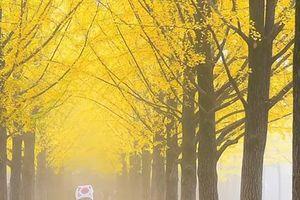 Hướng dẫn chi tiết cách xin visa du lịch Hàn Quốc