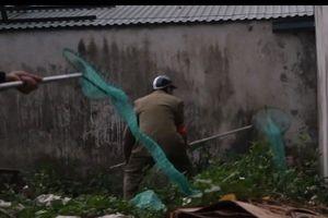 Pha luồn lách như phim hành động của đội bắt chó thả rông ở Hà Nội