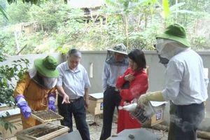 HLV-TT huyện Quan Hóa: Đào tạo nghề nuôi ong lấy mật cho hội viên