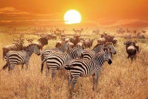 7 chuyến du lịch hoang dã khắp nơi trên thế giới
