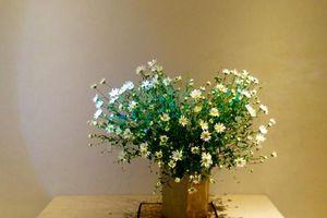 Tuyệt chiêu cắm lọ hoa cúc họa mi giúp cho ngôi nhà bừng sáng tài lộc