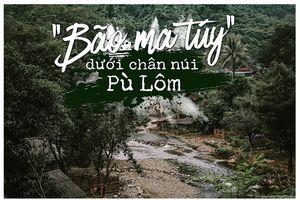 'Bão ma túy' dưới chân núi Pù Lôm
