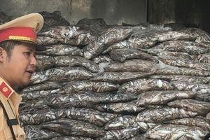 Xe chở 3,5 tấn cá thối, chảy nước xuống đường bị CSGT bắt ở Đà Nẵng