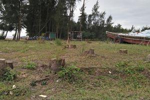 Thanh Hóa: Hàng trăm hecta rừng phi lao ven biển bị bức tử vì dự án du lịch