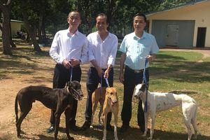 Sôi động trường đua chó ở Vũng Tàu trong ngày đặc biệt