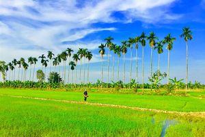 Thới Lai phấn đấu trở thành huyện nông thôn mới năm 2020