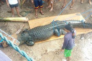 Bắt được cá sấu khổng lồ 'thành tinh', có thể ăn thịt người