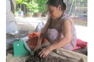 Người phụ nữ cuối cùng 30 năm tay không bắt trùn đất
