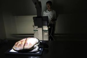 Hy hữu, 2 giờ nội soi cứu sống rùa biển bị ngộ độc rác
