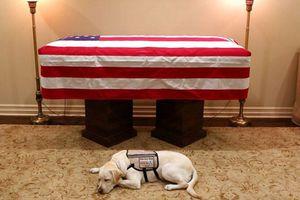 Chó nghiệp vụ túc trực bên linh cữu cựu Tổng thống Bush 'cha'