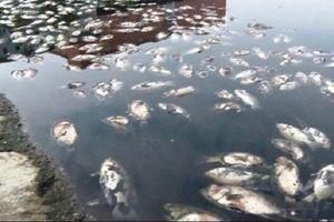 Nghệ An: Cá chết trắng hồ điều hòa Cửa Nam