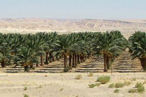 Israel: Biến bất lợi thành thế mạnh