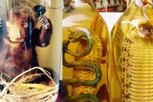 Ngâm rượu từ sản phẩm của động vật hoang dã có thể bị phạt tù