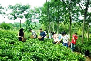 Phát triển du lịch nông nghiệp trong chương trình OCOP