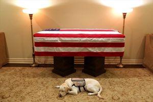 Chú chó trung thành của Bush cha hộ tống linh cữu đến Điện Capitol