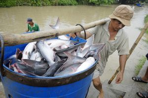 VASEP: Trung Đông là thị trường xuất khẩu cá tra tiềm năng