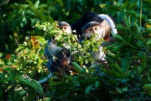 Đề cử Khu dự trữ sinh quyển thế giới thuộc tỉnh Ninh Thuận
