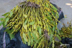 Bắt giữ ô tô vận chuyển 235kg hoa phong lan rừng quý hiếm