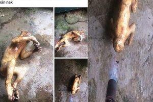 Bất ngờ về hình ảnh giết khỉ được thanh niên khoe trên Facebook